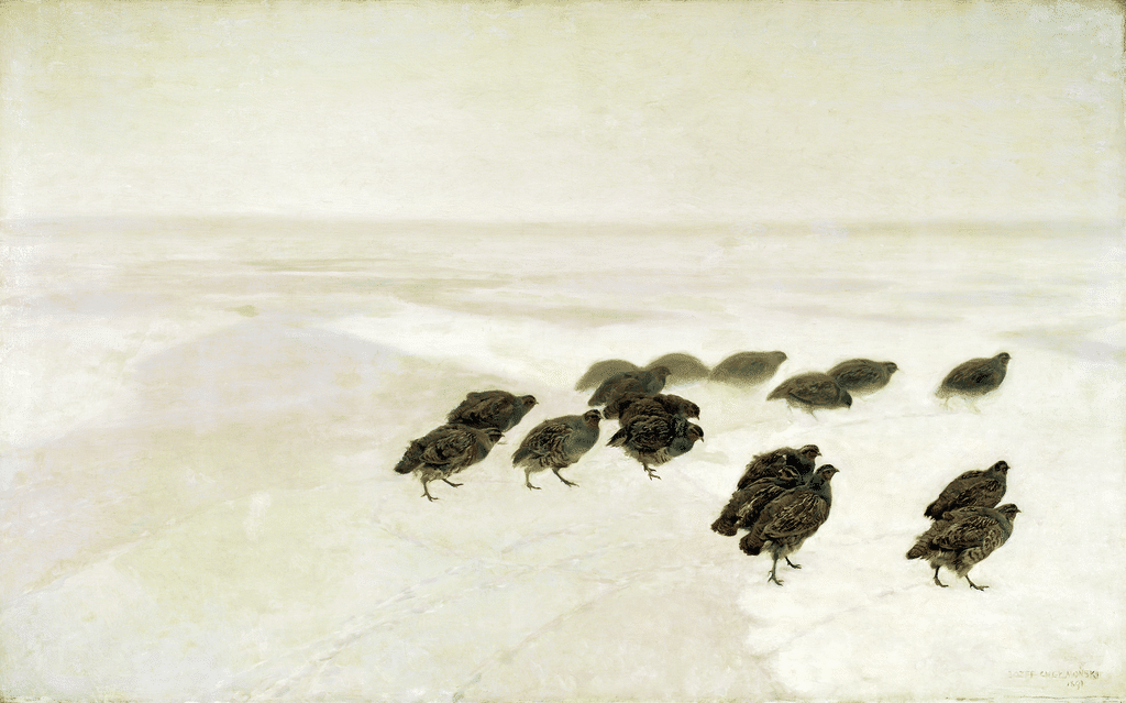 kuropatwy na śniegu