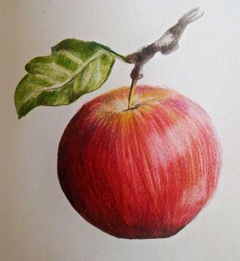Rysunek jabłka krok po kroku