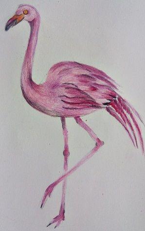 rysunek flaminga kredkami