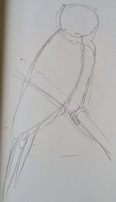 szkic papugi ołówkiem