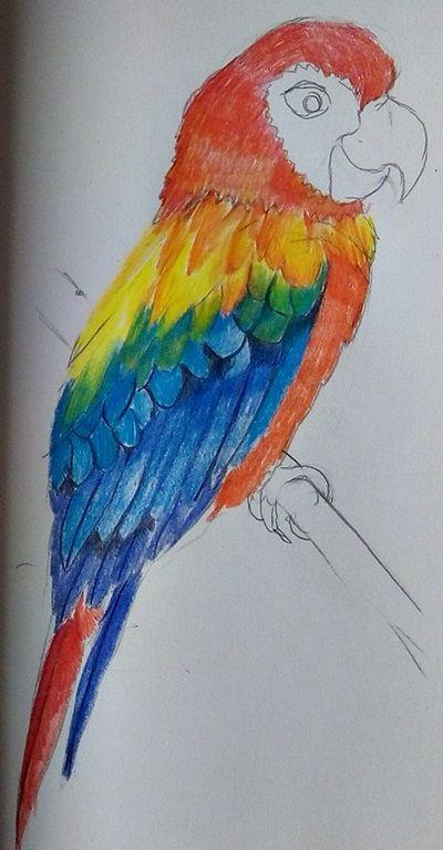 rysunek papugi kredkami