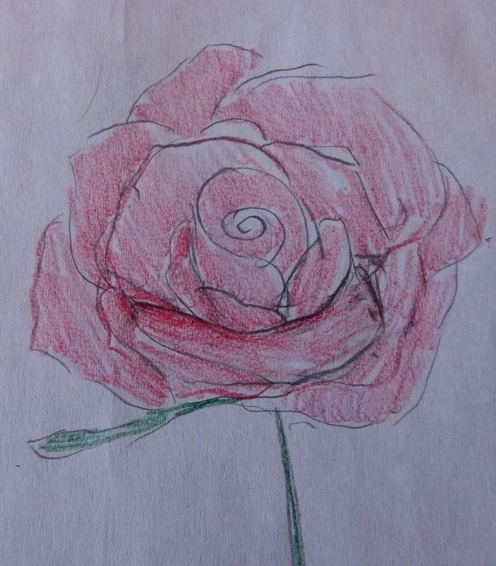 rysunek kwiatów