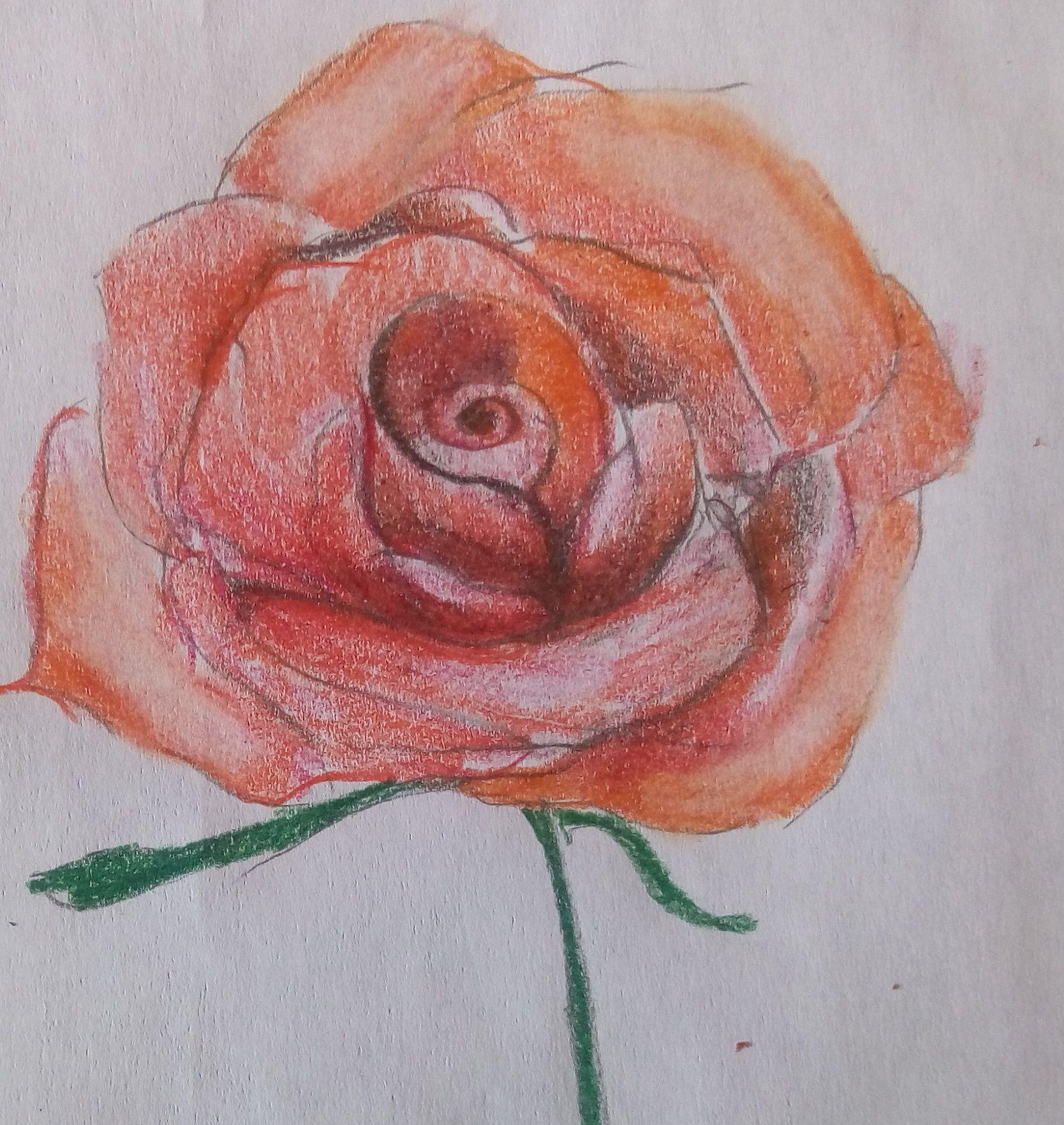 cień róży