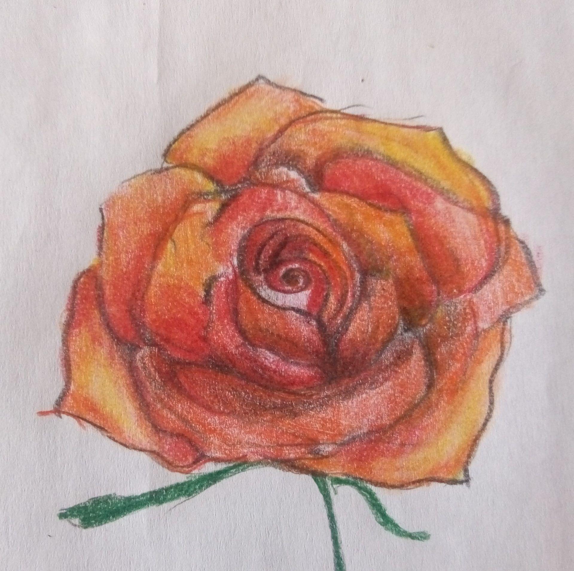 rysunek kwiatu róży krok po kroku