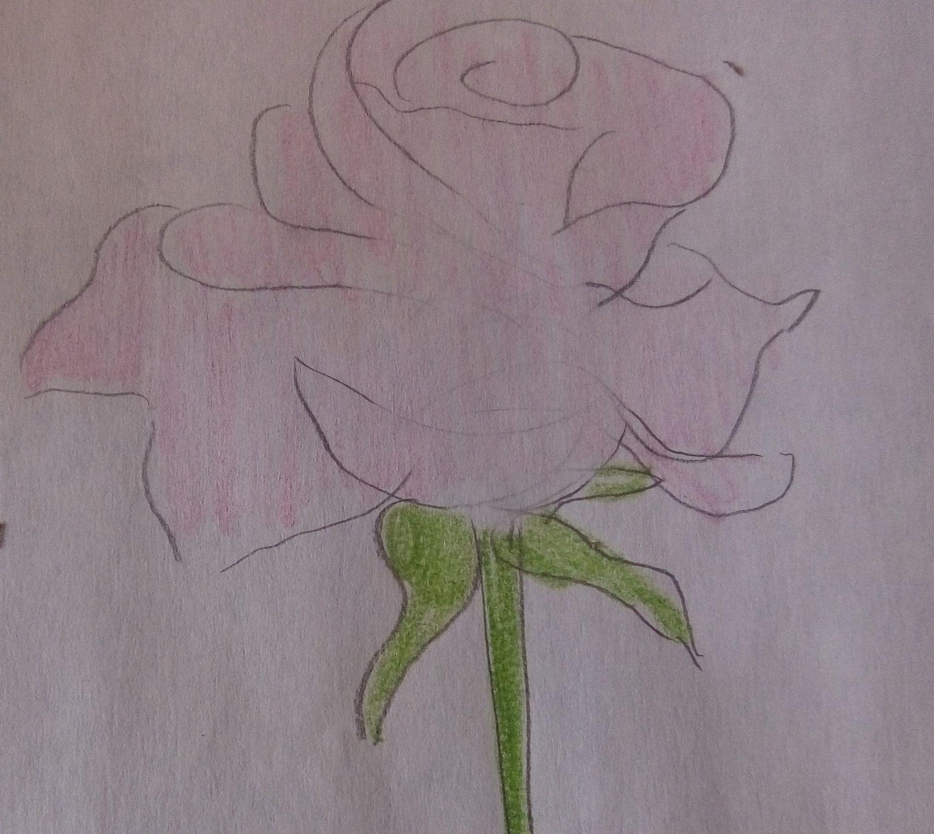 kolorowanie róży