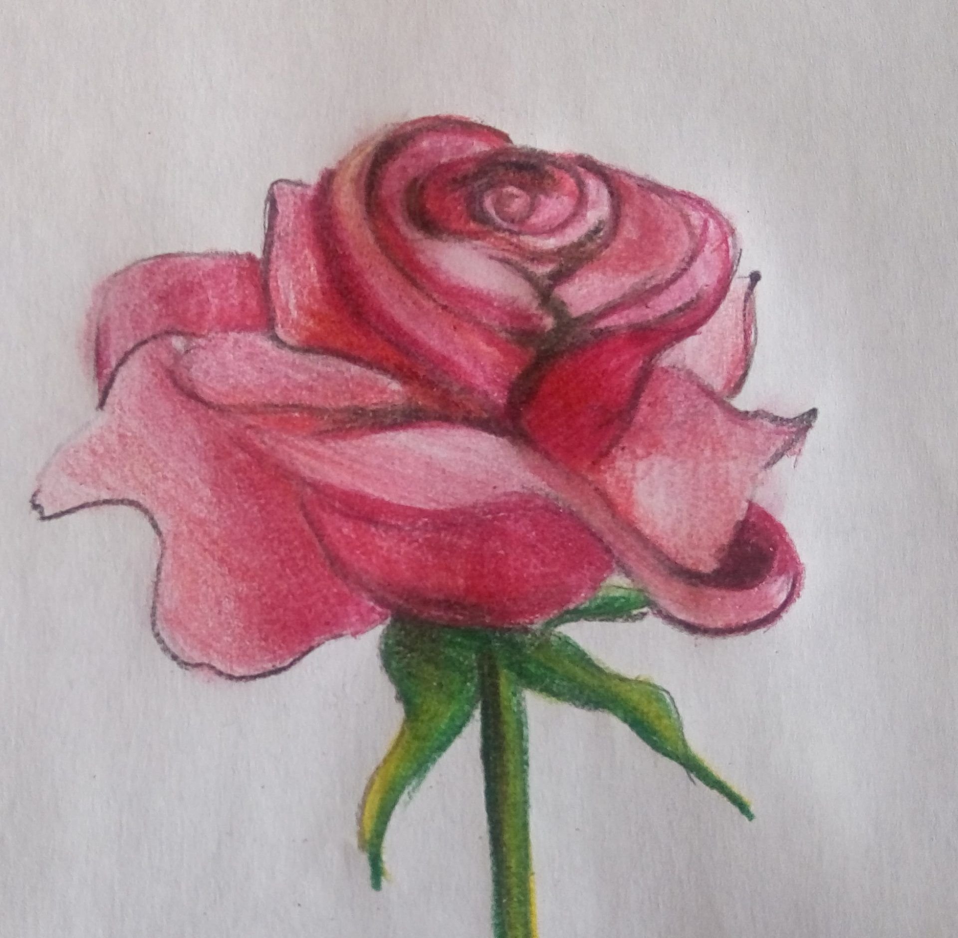 cieniowanie kwiatu róży