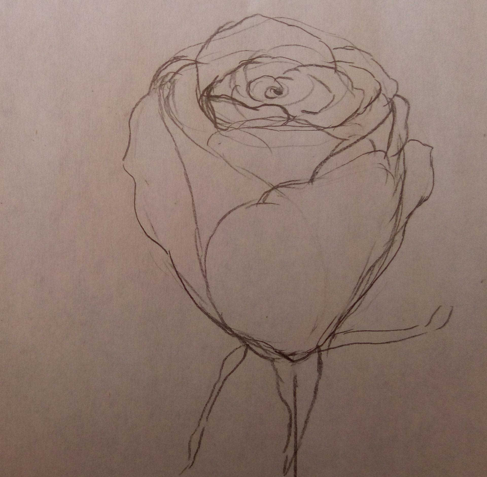 rysunki kwiatu róży