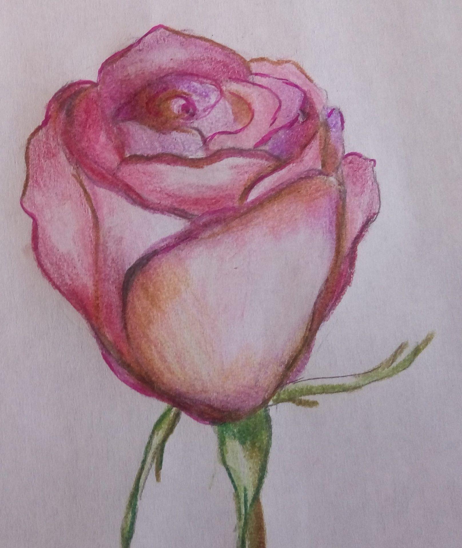 cieniowanie róży