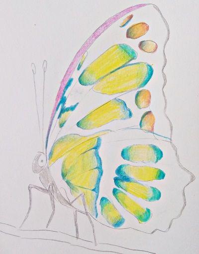 jak narysować motyla