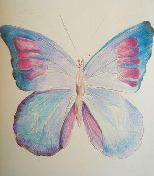 rysunek kolorowego motyla