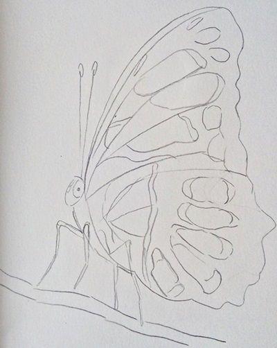 szkic motyla ołówkiem