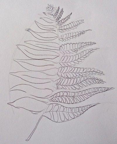 rysunek liści paproci ołówkiem