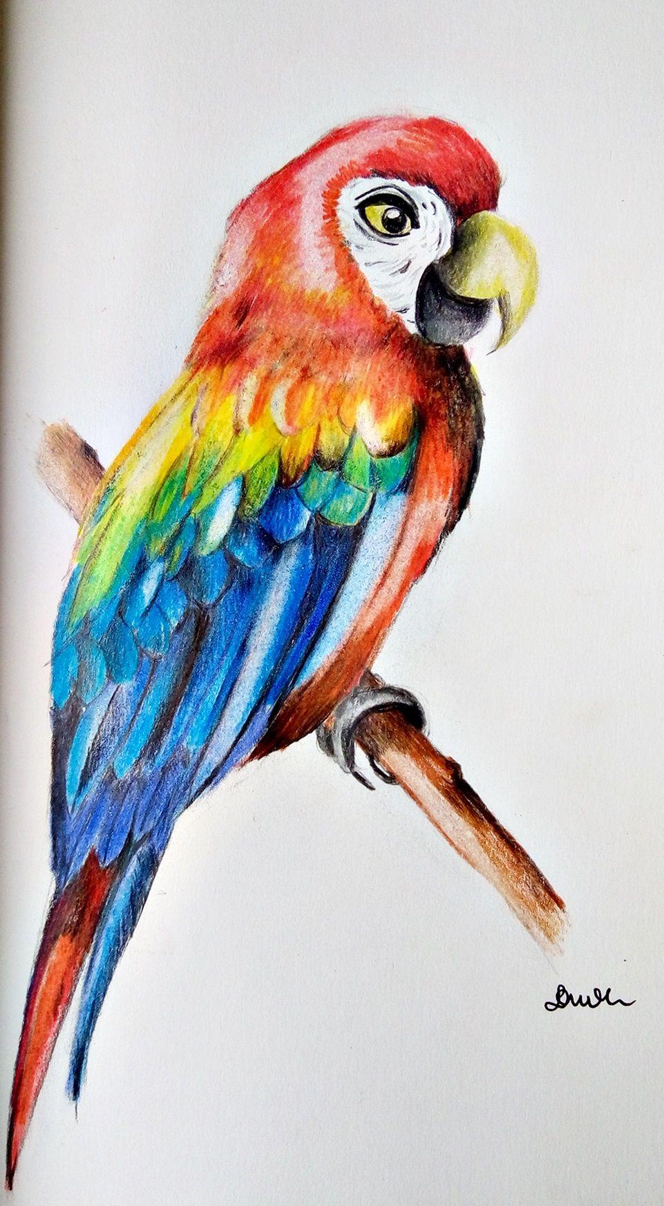 jak narysować papugę krok po kroku