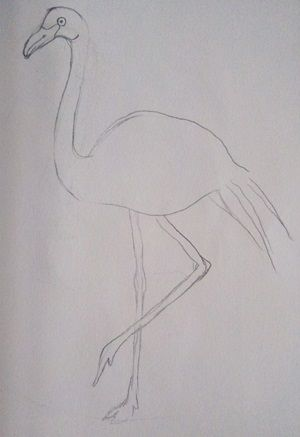 szkic flaminga