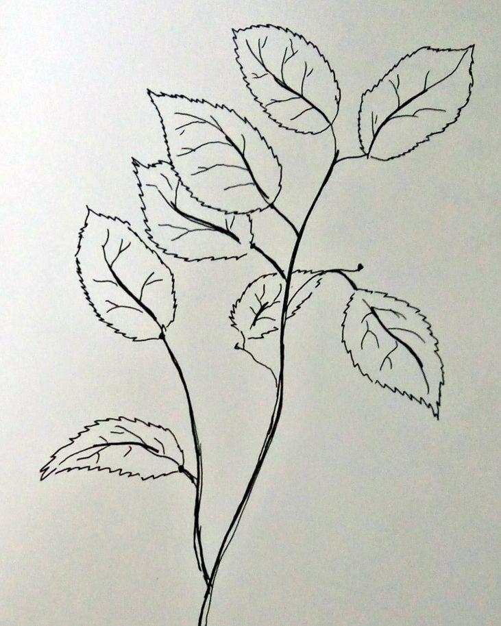 jak narysować liście