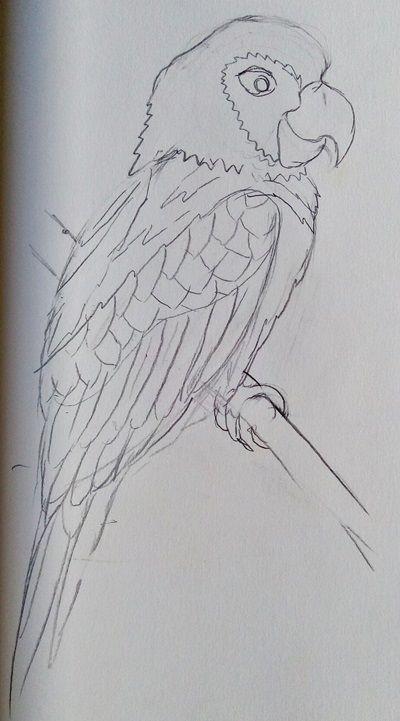 rysunek papugi ołówkiem