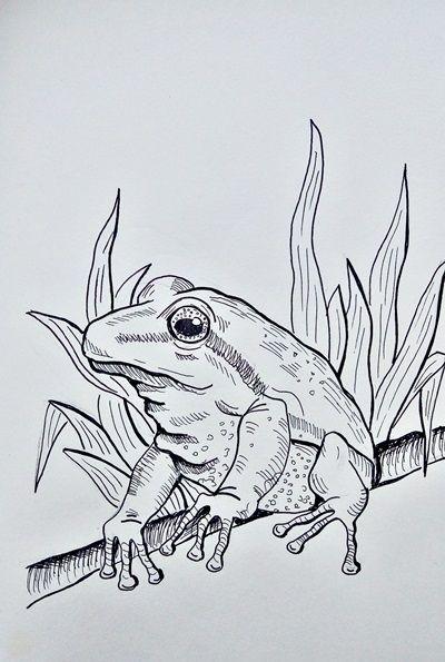 żaba lineart